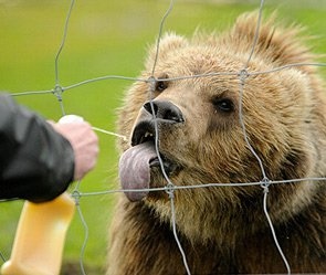 Медведь оторвал ногу работнику зоопарка