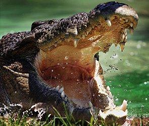 В Индонезии крокодил заживо съел отца 11 детей