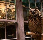 Защитники прав животных против Гарри Поттера